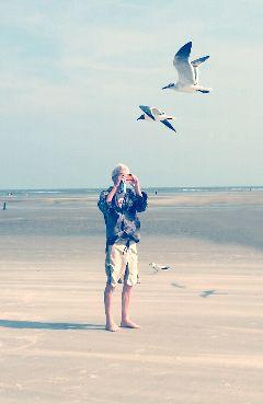 beach cellphoneshot seagulls