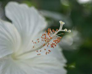 photography nature macro flower love