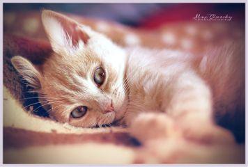 cute cat petsandanimsls portrait photography