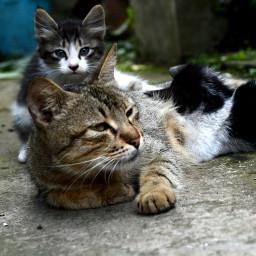 petsandanimals kitten