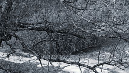nature photography sony branches blackandwhite