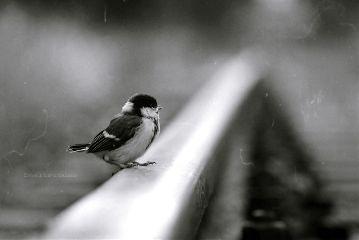 deeliriouss photography emotions nature mood