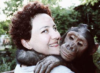 chimpanzee monkey animal