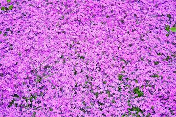 beautiful flowers summer