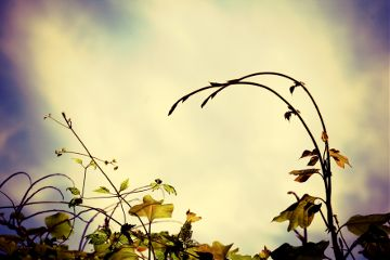 nature summer lomoeffect