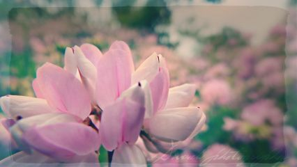 flower photography nature