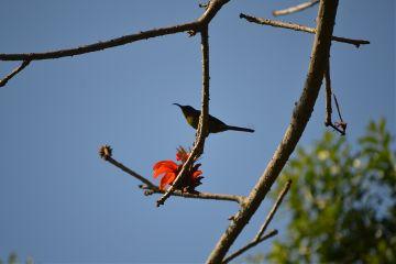 photography nature petsandanimals birds flower