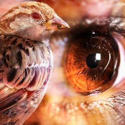 reflection bird nature petsandanimals photography
