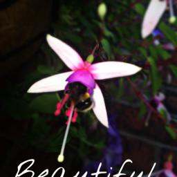 likeforlike repostforrepost bee flower blurr