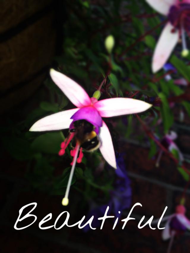 #LIKEFORLIKE #REPOSTFORREPOST #Bee #Flower #blurr #Garden #beautiful #interesting #surviving #pollon
