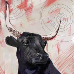 dchorns drawing bull