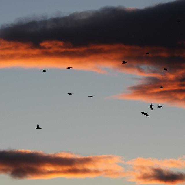 Aves volando #petsandanimals #atardecer #emotions #cute #colorful