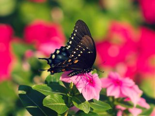 butterfly nature colorful bokeh flower