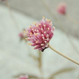 retro macro flower