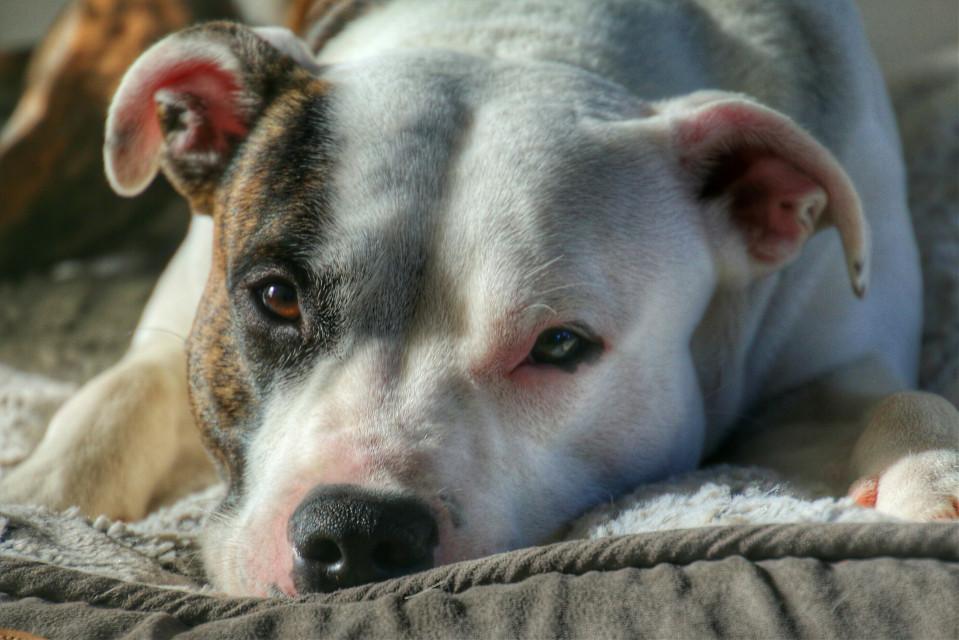 #cute #photography  #petsandanimals #MyDog #dog #hdr