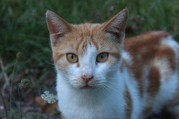 cat cats gatto gatti eye