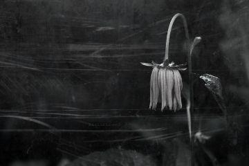 deeliriouss emotions photography mood flower