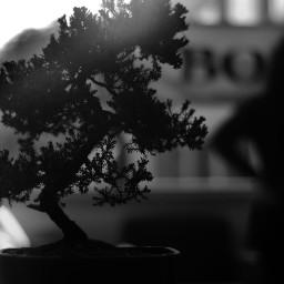 monochrome blackandwhite plants tree intense